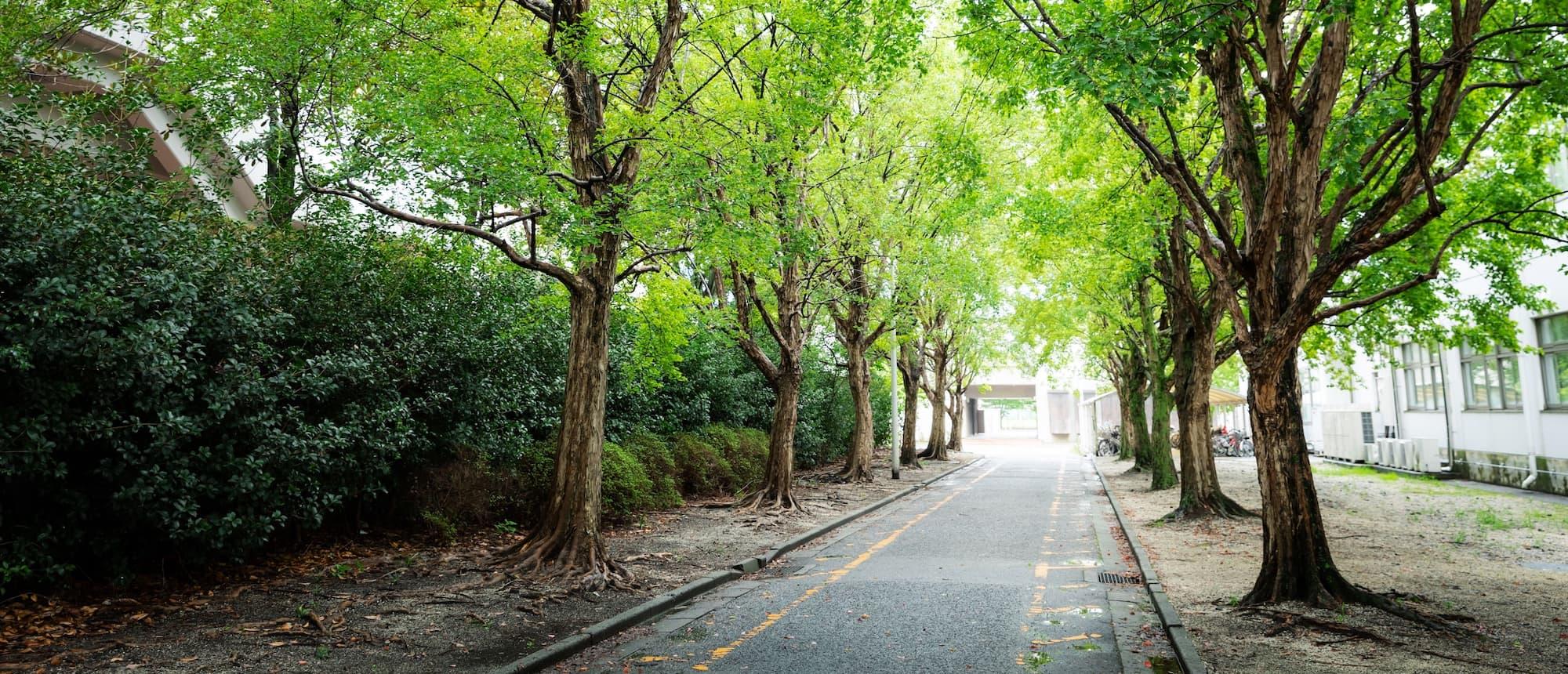 写真:校内の並木林