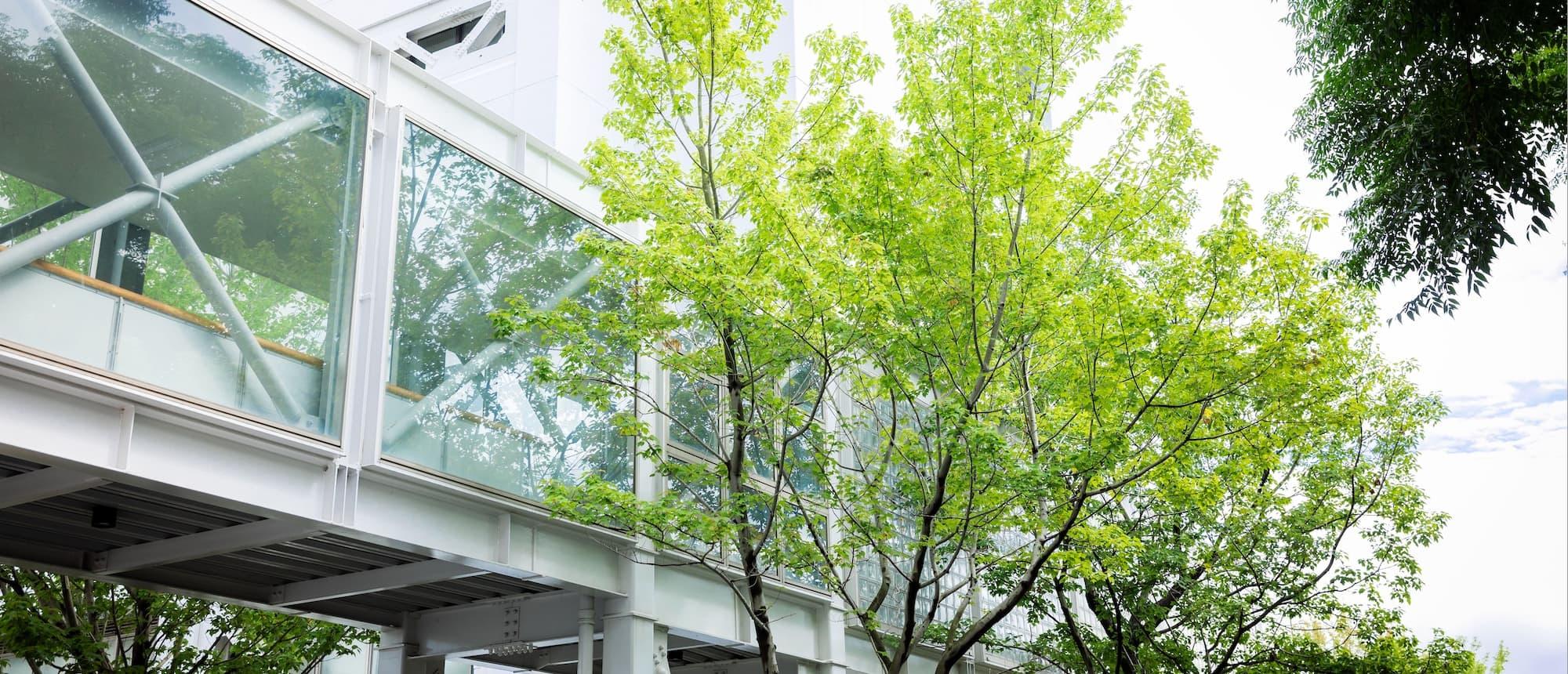 写真:鮮やかな緑とガラス張りのわたり廊下